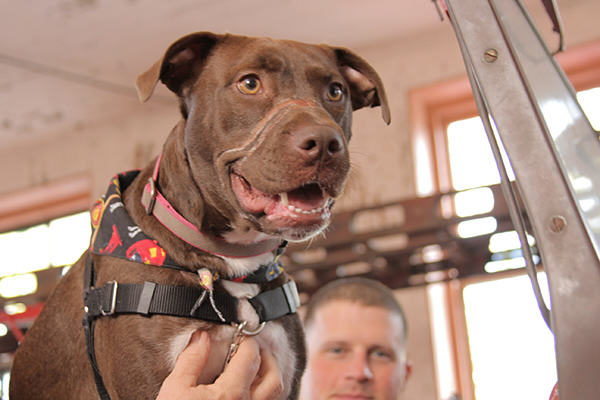 IMG 5174 600x400 1 Caitlyn The Abused Dogs Amazing Day Following Recovery