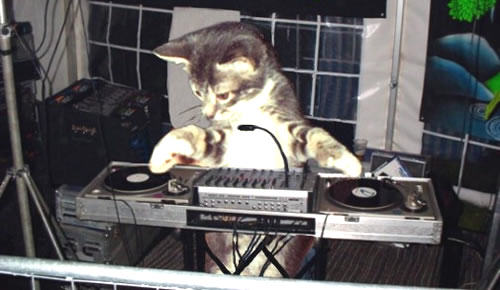 Five Peculiar Human Specimens Youre Guaranteed To Meet In The Club cat dj
