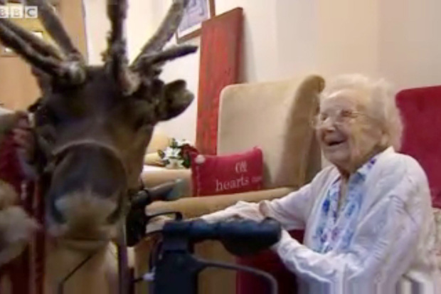 Reindeer Visits Elderly People In Care Home And Makes Our Day cupid1
