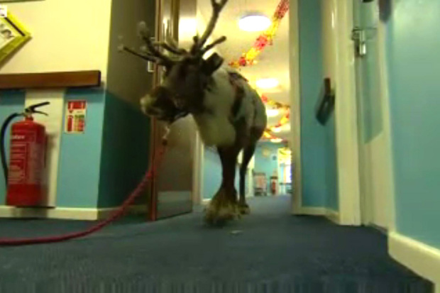 Reindeer Visits Elderly People In Care Home And Makes Our Day cupid2