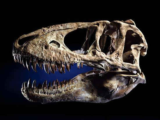 nick cage fossil 3 Nicholas Cage Returns Stolen Dinosaur Skull To Mongolia