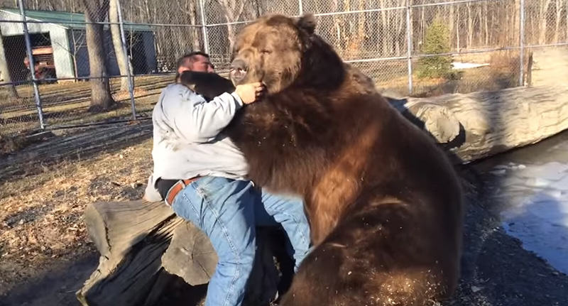 bearfacebook Russian Man Relaxes With Best Friend, Also His Friend Is A Bear