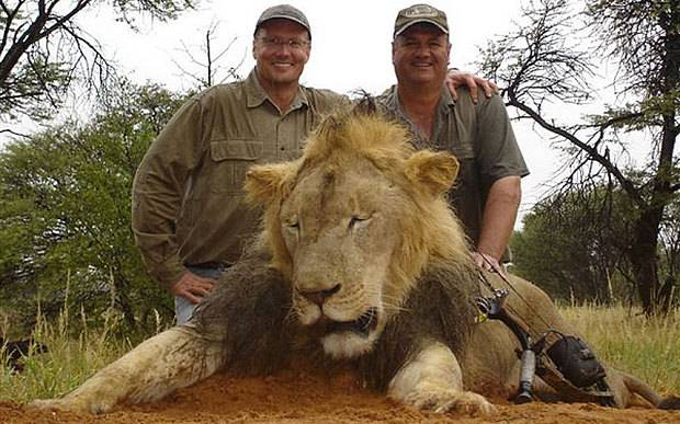 Outrage As Controversial Raffle Offers Winner Chance To Shoot A Lion lion raffle 3