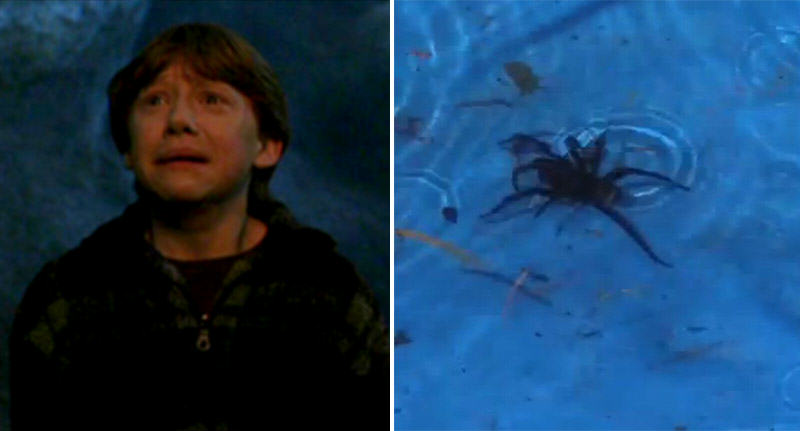 spider pool FB Kids Scream For Help As Deadly Spider Found In Paddling Pool