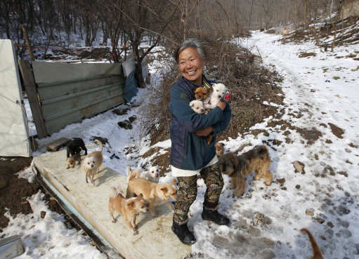 PA 25415491 This Woman Is Singlehandedly Raising 200 Dogs She Saved From Meat Farms