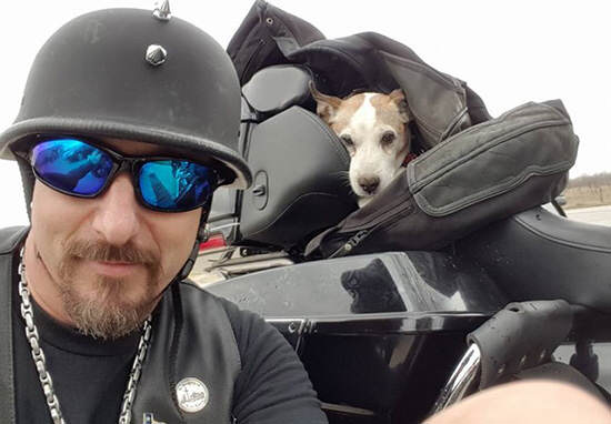 Biker Rescues Pup Left For Dead On Highway, Makes Him 'Co-Pilot'