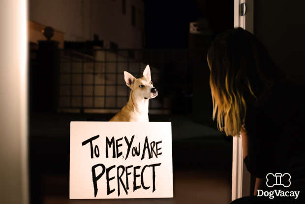 Dogs Recreate Famous Romantic Film Scenes For Valentines Day dogs recreate movie scenes love actually