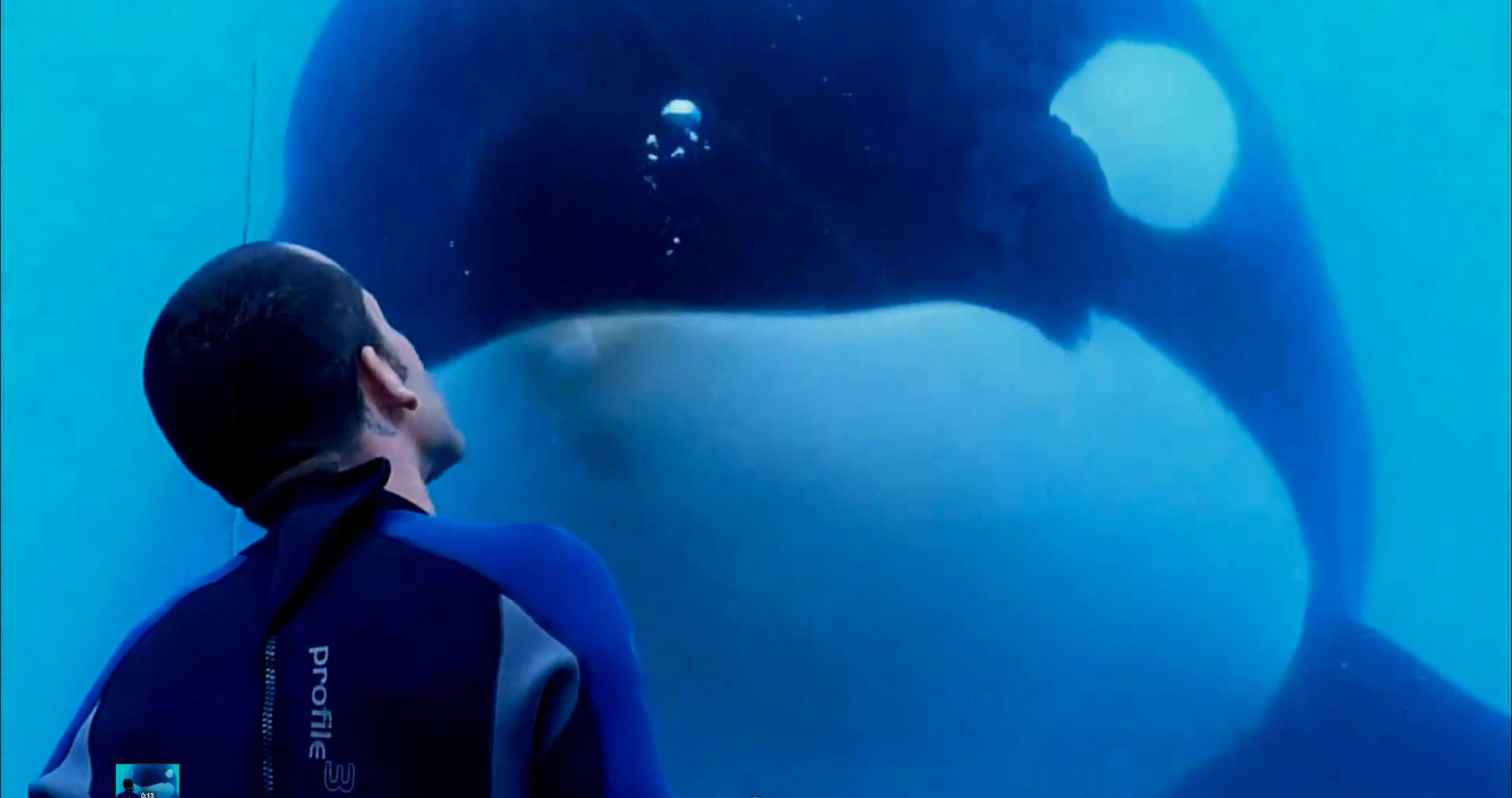 04 blackfish Heres What Will Happen To SeaWorlds Last Generation Of Killer Whales