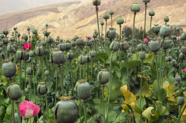 Afghanistan 16 640x426 New Study Claims The War On Drugs Has Failed