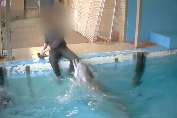 Man Gets Far Too Intimate With Dolphin, And People Arent Happy RamBam