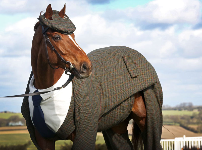 Screen Shot 2016 03 15 at 17.45.47 1 Horse Gets Tailored Suit, Looks More Dapper Than You