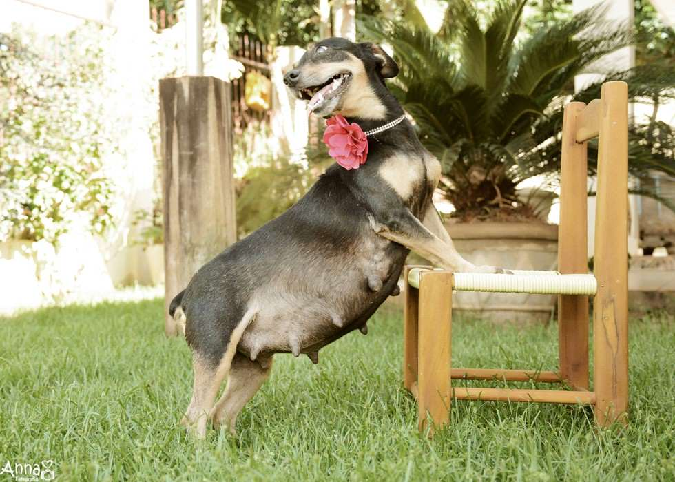 lil5 Pregnant Dog Is Totally Working It In This Photoshoot