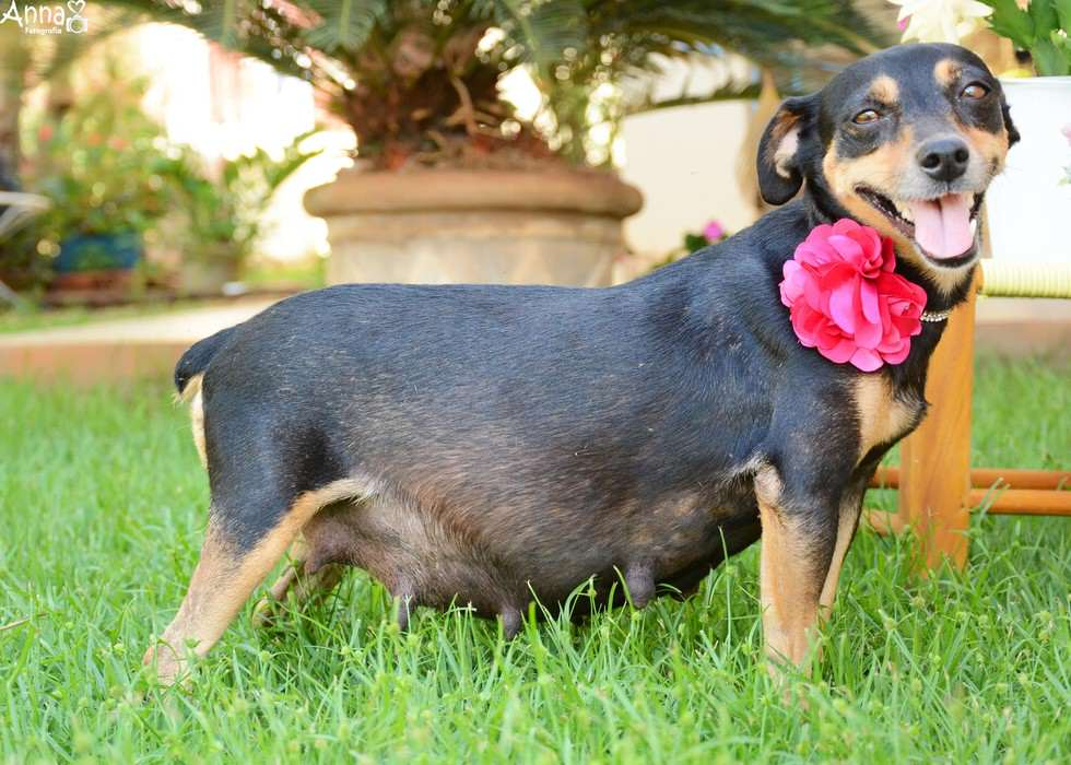 lil8 Pregnant Dog Is Totally Working It In This Photoshoot