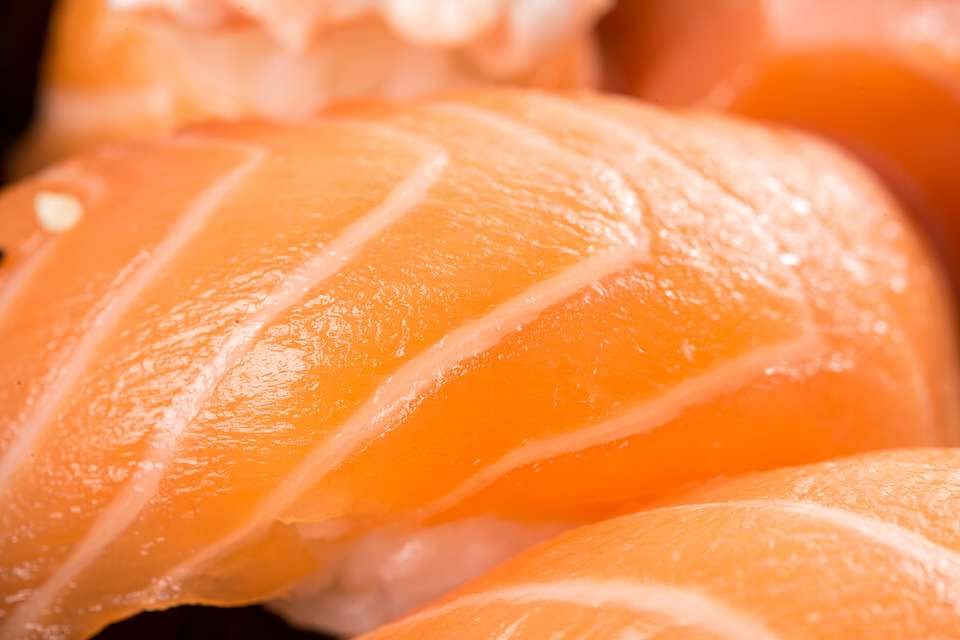 pixabay 1 Salmon Found To Contain High Taces Of Cocaine, Prozac And 78 Other Drugs