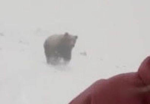 Shocking Video Shows Snowboarder Singing Rihanna, Unaware A Bear Was Chasing Her Kelly Murphy 1 615x426