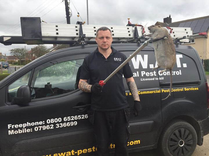 SWNS RAT 03 NOPE: Another Giant Super Rat Was Just Found In The UK