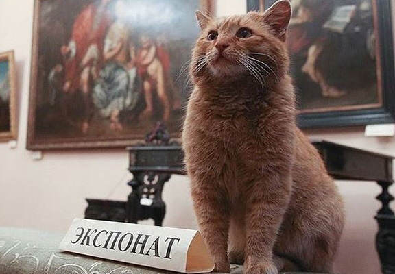 Museum's April Fools Joke Goes Horribly Wrong And Now They Have A Cat Employee