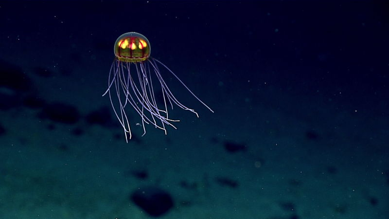 c8rihlbdzjwppc5wphpl These Photos From The Deepest Depths Of The Ocean Are Mind Blowing