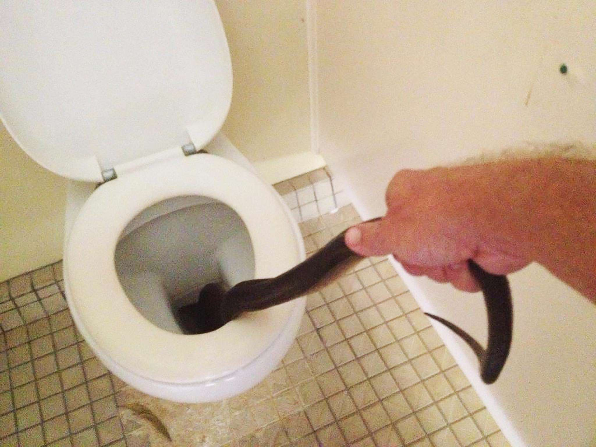 NOPE: These Photos Will Put You Off Using Toilet Forever snake2
