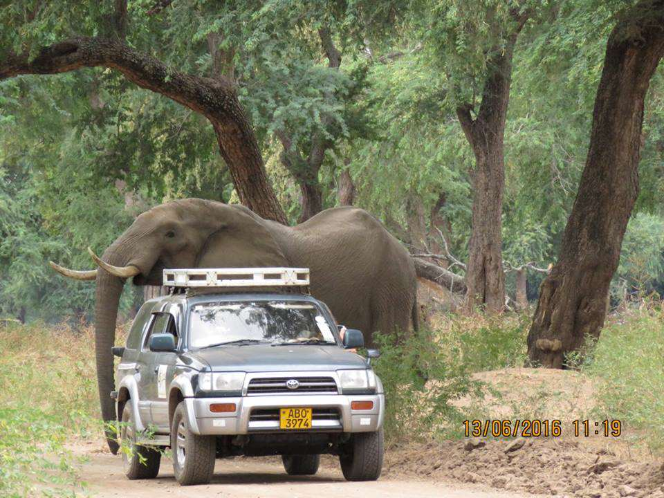 Elephant Shot In The Head By Poachers Miraculously Survives 13417613 989298177790239 2928099729685086913 n