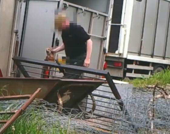 Hideous Video Shows Fox Cubs Being Put In Hunting Dogs Kennel For Training fox hunt 2