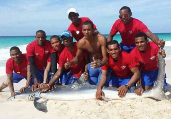 Tourists Kill Shark After Dragging It From Sea Just To Pose For Photos shark web thumb