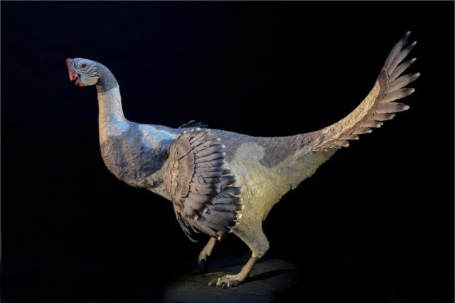 02 feathered dinosaur ngsversion 1459872001709 adapt 1900 1 640x426