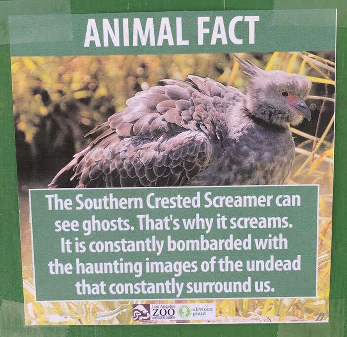 funny animal facts fake los angeles zoo obvious plant 5 57767446233fe  700 Prankster Brilliantly Trolls Zoo With Made Up Animal Facts