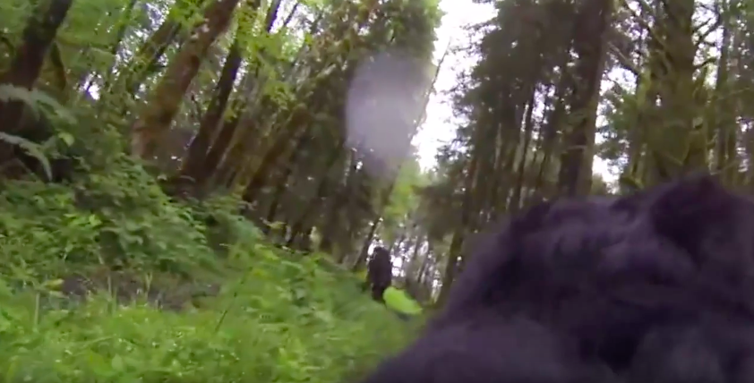 Screen Shot 2016 08 18 at 13.46.10 Did This Dog With GoPro Strapped On Its Back Find Bigfoot?