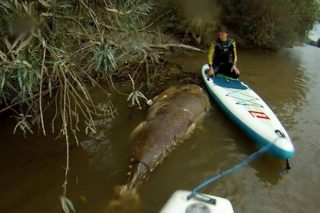 Seven Foot Sea Monster Caught In Gloucestershire River