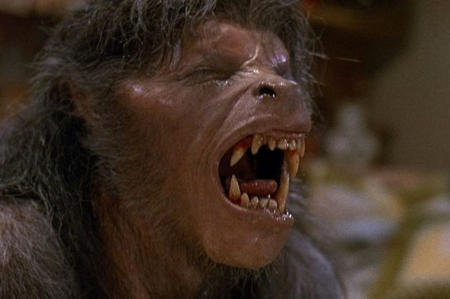 american werewolf in london an 1981 004 wolf groan 640x426 Terrified Woman Claims to Have Seen An 8 Foot Tall, Fanged Werewolf