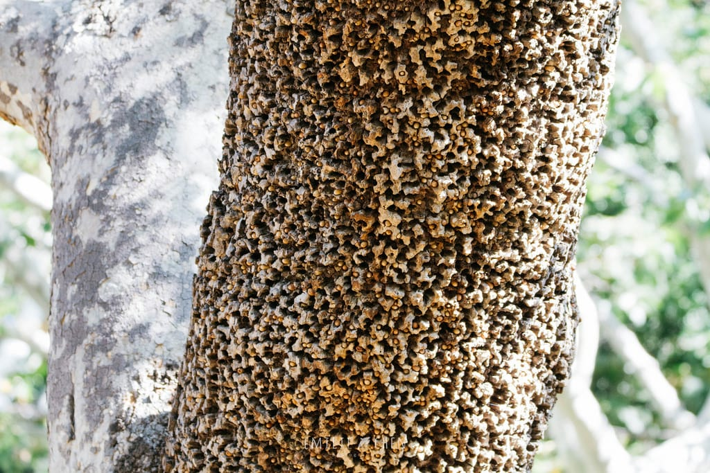 2282UNILAD imageoptim trypophobia woodpecker tree Trypophobia Is The Terrifying Phobia You Didnt Know You Had