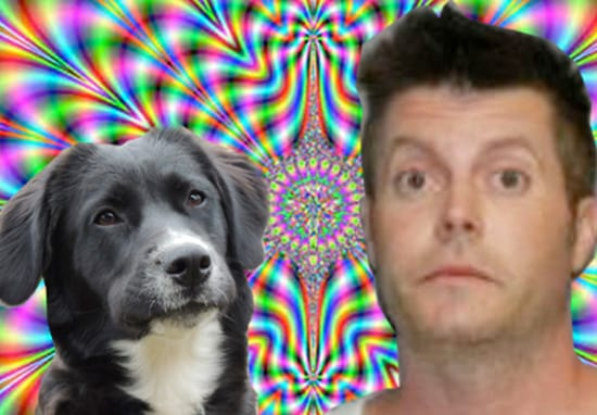 24327UNILAD imageoptim lsd1 Man Tripping On LSD Saves Dog From Imaginary Fire