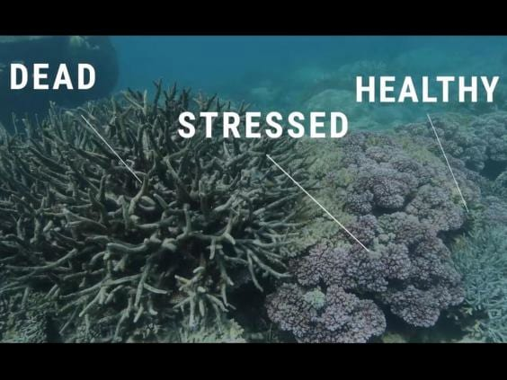 40995UNILAD imageoptim deadstressedhealthycoral The Great Barrier Reef Has Been Pronounced Dead