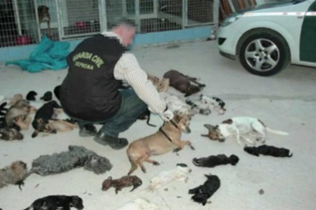 Animal Shelter Accused Of Killing 2,000 Cats And Dogs Slowly And Painfully 24979UNILAD imageoptim nintchdbpict000284609919 640x426