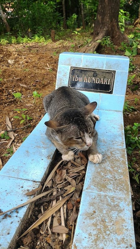 33396UNILAD imageoptim SWNS CAT GRAVE 03 This Heartbroken Cat Has Lived By Dead Owners Grave For A Year