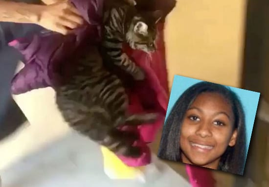 Shocking Video Shows Woman Throw Cat From Third Floor Balcony