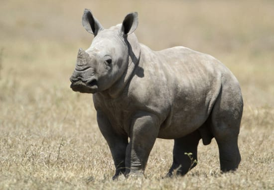 This National Park Shoots Poachers To Protect Rhinos