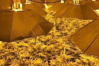Giant Cannabis Factory Found In 'Impenetrable' Nuclear Bunker