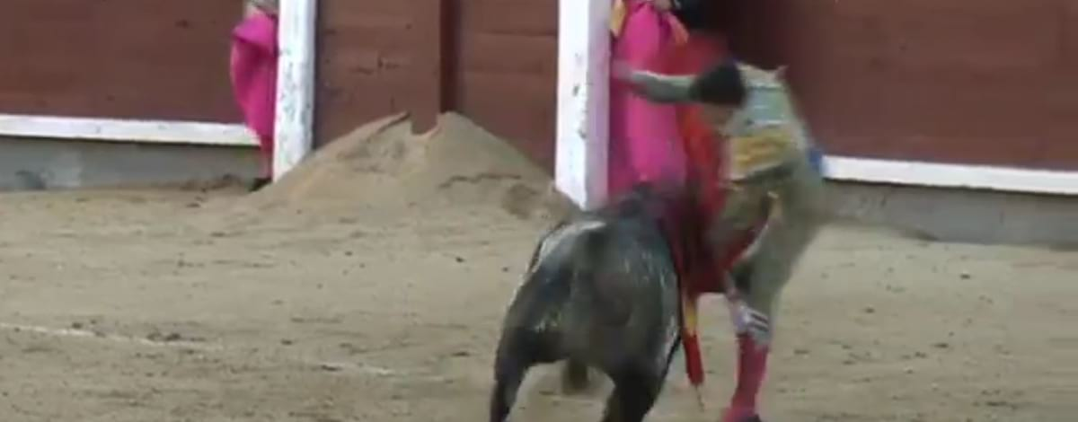 Bullfighter Savagely Gored Through The Throat On His Debut 1644 raging bull