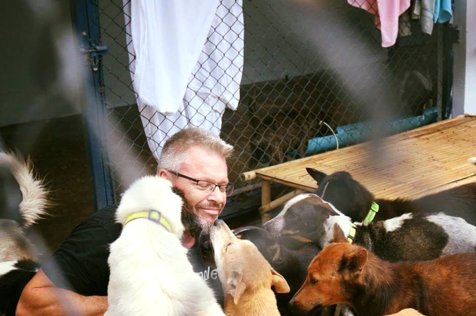 This Man Fell In Love With Thailands Stray Dogs And Now Feeds 80 Every Day 356 baines1